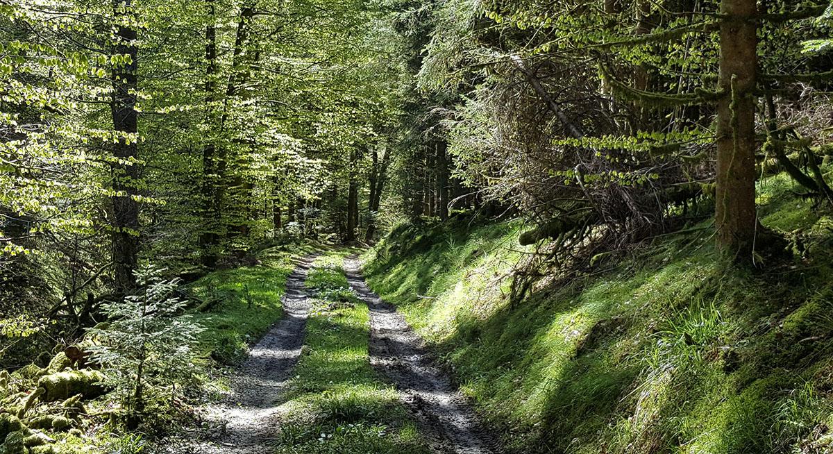 Forêt européenne